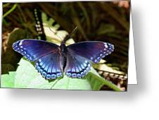 Red-spotted Purple 4257 Greeting Card