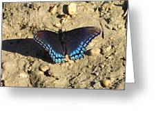 Red Spotted Purple Astyanax Greeting Card
