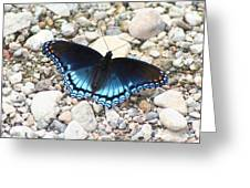 Red Spotted Purple Greeting Card