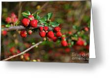 Red Spring Buds Greeting Card
