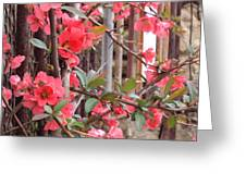 Red Spring Greeting Card