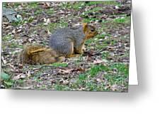 Fox Squirrel 2 Greeting Card