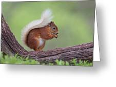 Red Squirrel Curved Log Greeting Card