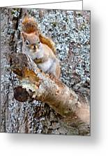 Red Squirrel Maine Greeting Card