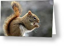 Red Squirrel On Wooden Fence II Greeting Card
