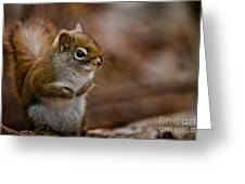 Red Squirrel Pictures 170 Greeting Card