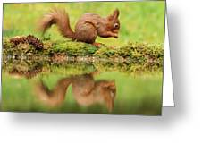 Red Squirrel Reflection Greeting Card