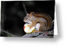 Red Squirrel Greeting Card by Steven Scott