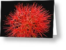 Red Starburst2 Greeting Card