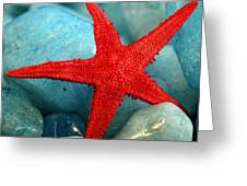 Red Starfish Greeting Card