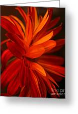 Red Sunflower 1 Greeting Card