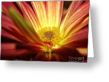 Red Sunflower 3 Greeting Card