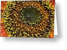 Red Sunflower Macro Greeting Card