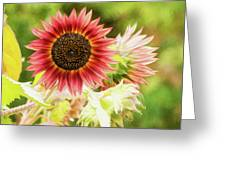 Red Sunflower, Provence, France Greeting Card