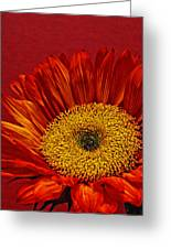 Red Sunflower Viii Greeting Card