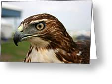 Red Tail Hawk 3 Greeting Card