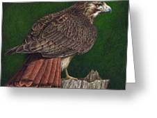 Red Tail Hawk Greeting Card by Pat Erickson