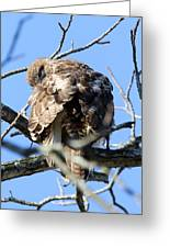 Red Tail II Greeting Card