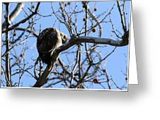 Red Tail IIi Greeting Card