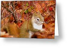 Red Tail Squirrel  Greeting Card