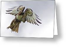 Red Tail Takeoff Greeting Card
