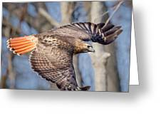Red Tailed Hawk Flying Greeting Card