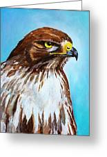 Red Tailed Hawk Portrait Greeting Card