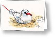Red-tailed Tropicbird On Aitutaki Greeting Card