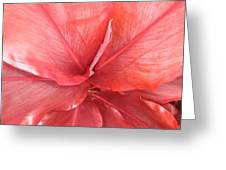 Red Tea Leaf Greeting Card