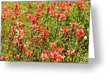Red Texas Wildflowers Greeting Card