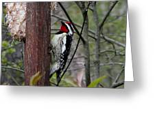 Red Throat Greeting Card
