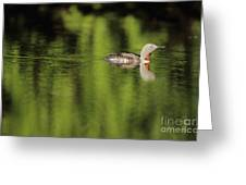Red Throated Loon Greeting Card