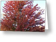 Red Tree In The Fall Greeting Card