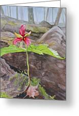 Red Trillium In The Spring  Greeting Card