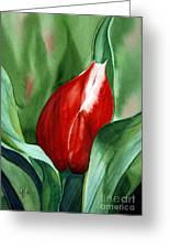 Red Tulip 2 Greeting Card