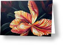 Red Tulip Blossom Greeting Card
