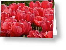 Red Tulip Buds Crest The Earth Greeting Card