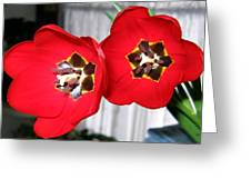 Red Tulip Duo Greeting Card