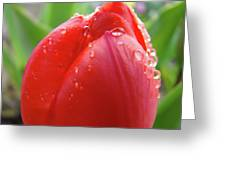 Red Tulip Flower Macro Artwork 16 Floral Flowers Art Prints Spring Dew Drops Nature Art Greeting Card