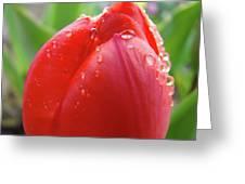 Red Tulip Flower Macro Artwork 16 Floral Flowers Art Prints Spring Dew Drops Nature Art Greeting Card
