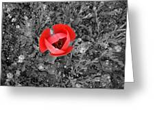 Red Tulip From Above Greeting Card