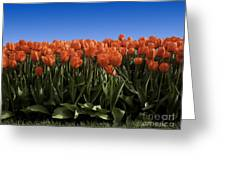 Red Tulip Garden Greeting Card