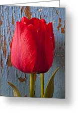 Red Tulip Greeting Card by Garry Gay