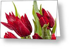 Red Tulip Heads Sprinkled Greeting Card