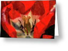 Red Tulip Texture Greeting Card