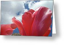 Red Tulips Flowers Art Prints Spring Tulip Garden White Clouds Baslee Troutman Greeting Card