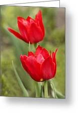 Red Tulips In A Meadow Closeup Sunny Spring Day Greeting Card