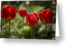 Red Tulips In Light Greeting Card