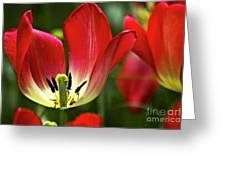 Red Tulips Petals Greeting Card