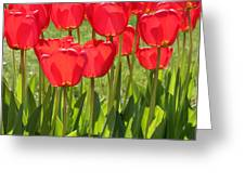 Red Tulips Square Greeting Card